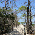 Guided Island walks with the Marine Biologist