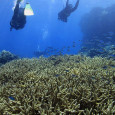 Scuba diving on Flynn Reef