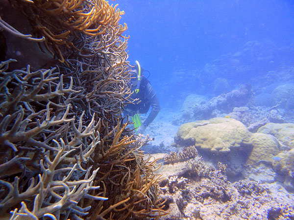 Dive Review Clippers, Saxon Reef