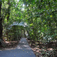 Shaded rainforest boardwalks