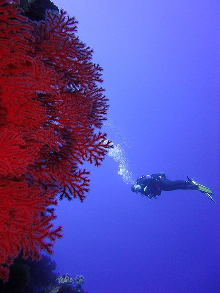 Blue water, great vis and cool corals!