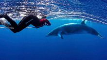 Minke Whale and Snorkeler.