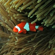 Nemo at Michealmas Cay