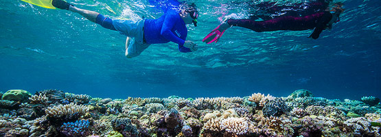 Coral Bleaching Cairns Great Barrier Reef
