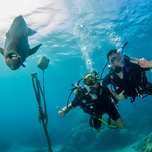 Divers with Mauri Wrasse Fish