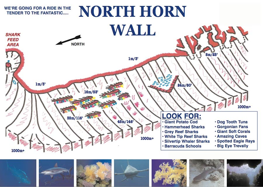 Dive Site - North Horn Wall at Osprey Reef