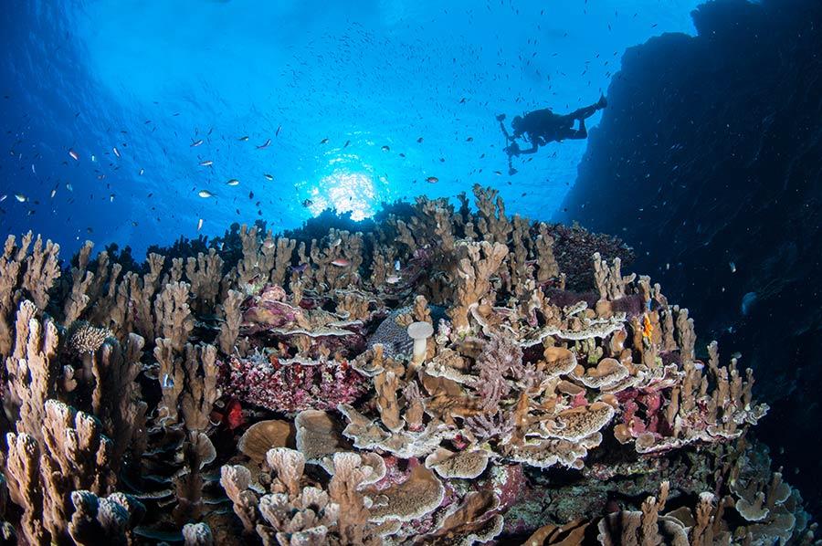 Bougainville Reef & Scuba Diver