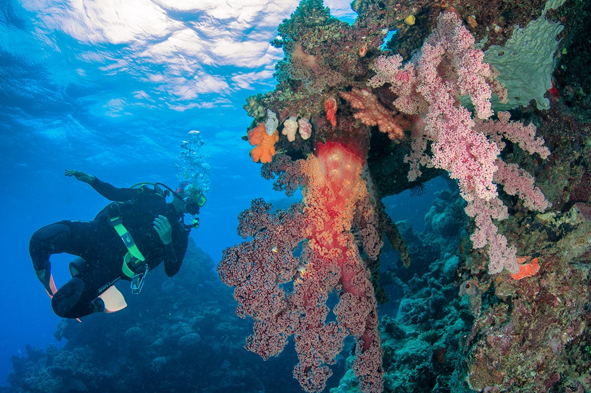 Scuba Diver with beautiful red soft corals.