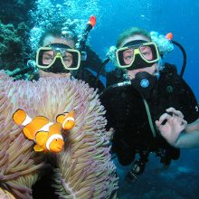 Scuba Divers with Anemone fish